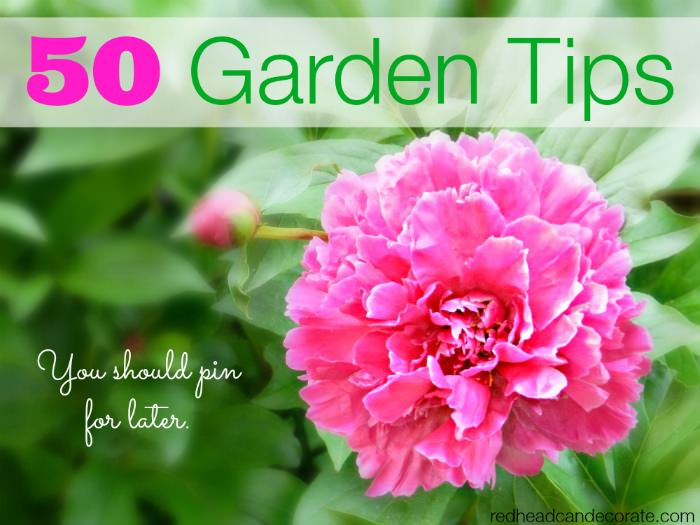 50 Garden Tips You Should Pin For Later