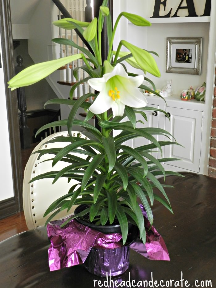 Easter Lily w: foil