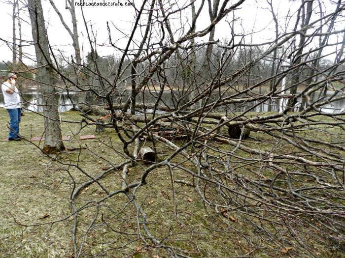 Rick w: tree 2