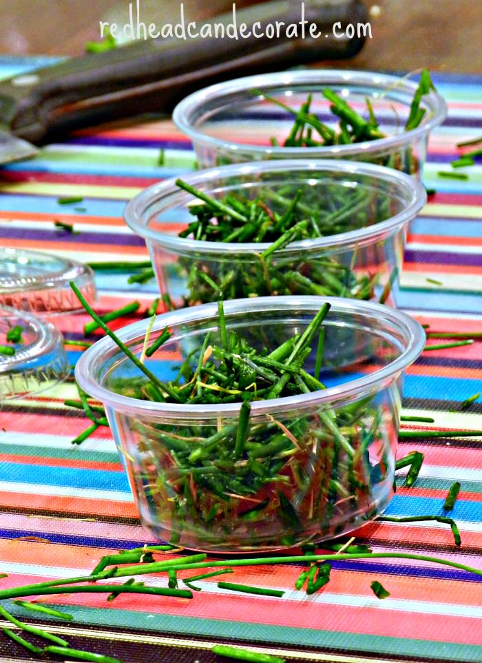 Storing Chives