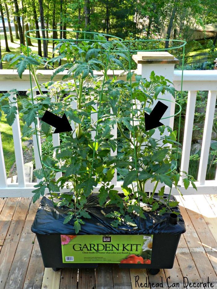 Tomato Garden Kit