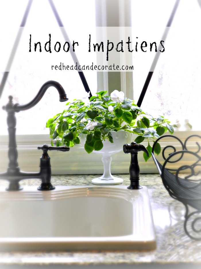 Indoor Fern Growing Tips: This woman grows the most amazing ferns following these very simple tips.