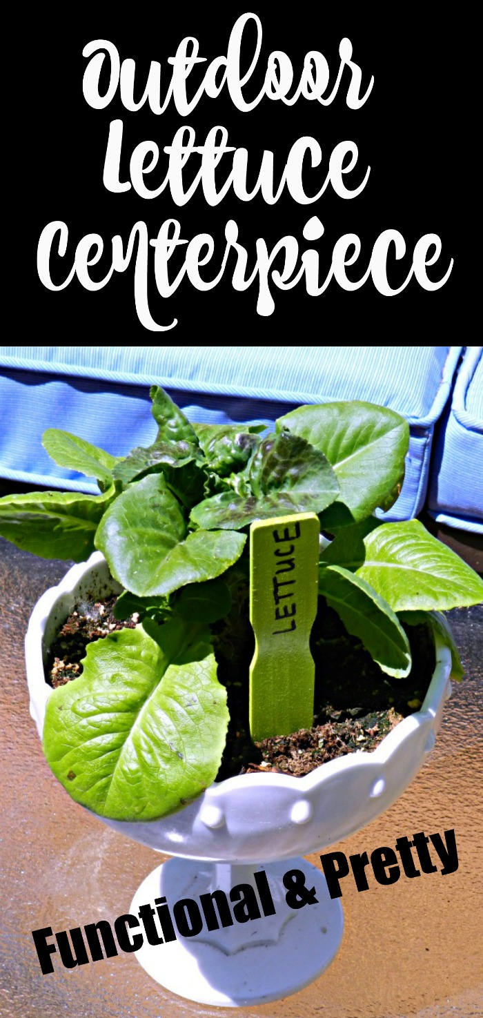 Grow lettuce in a pretty container and use it as a centerpiece on your outdoor patio furniture!