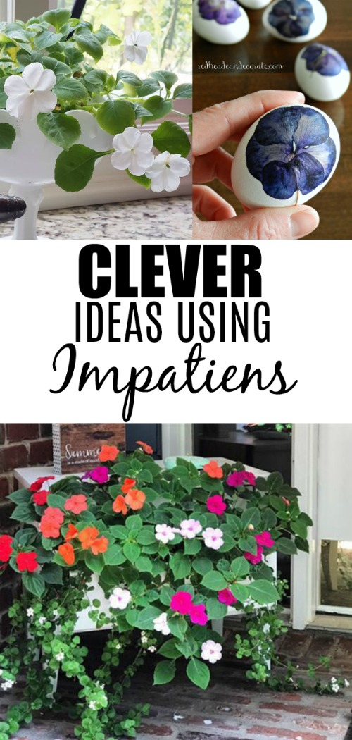 Impatien Easter eggs, indoor impatiens, and even a thrifty night stand full of them for your front porch!