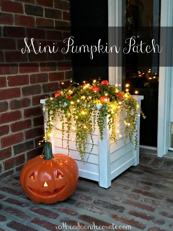 Mini DIY Pumpkin Patch