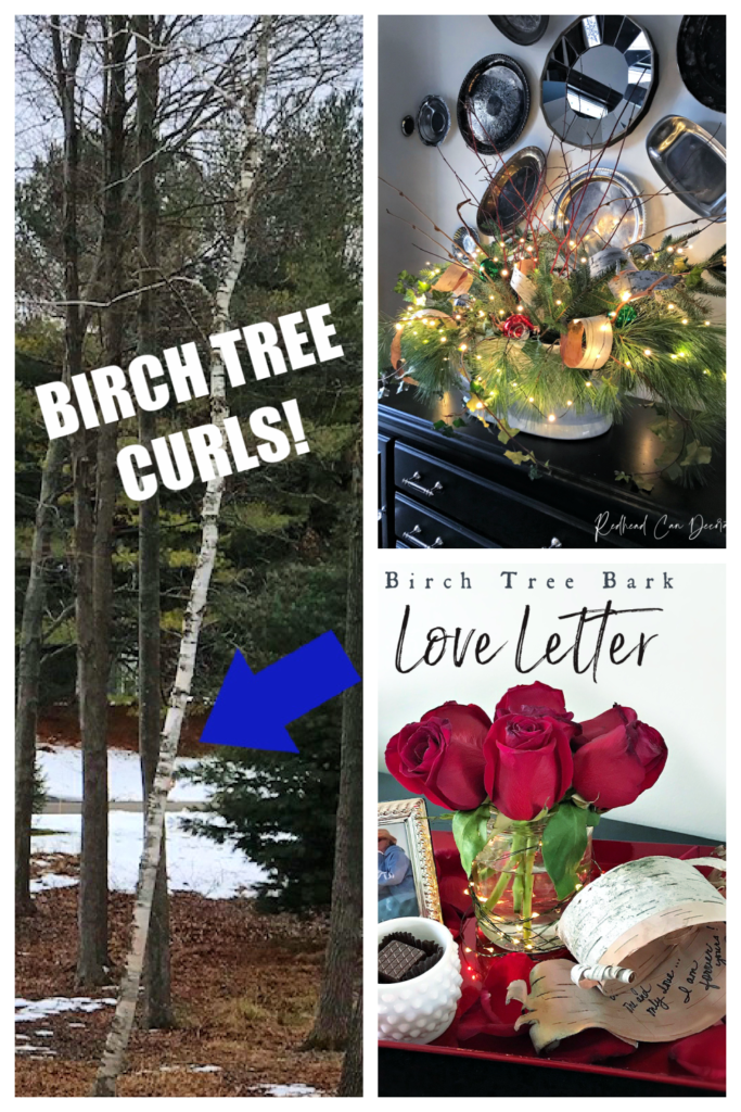 Birch Tree Curls form naturally and can be used for beautiful decorating!